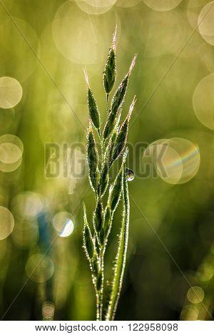 Green grass at the morning close up