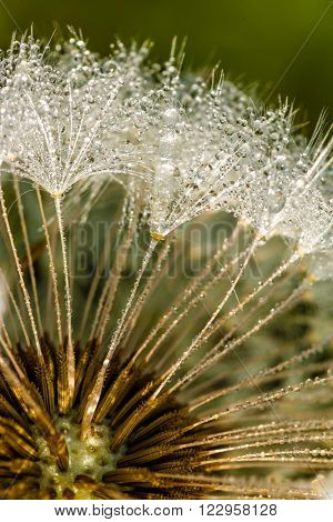 Dandelion inside close up photography in spring