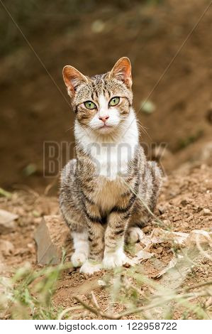 Young cat posing for the photograph in the forest
