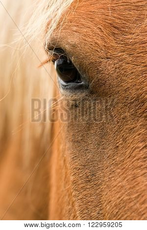Close up of a brown horse eye ** Note: Shallow depth of field