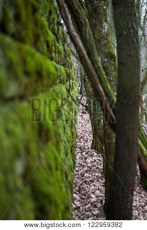 Ruins covered by moss in the wet forest ** Note: Shallow depth of field