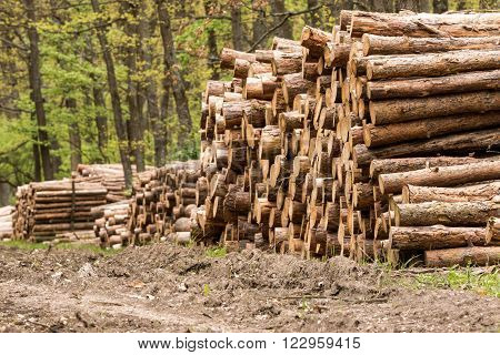 Big pile of wood in the forest ** Note: Shallow depth of field