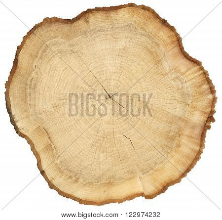 Cross section slice of wood showing tree rings and cracks