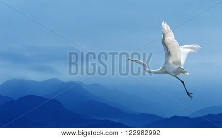 Beautiful tropical crane in flight against blue sky panoramic image