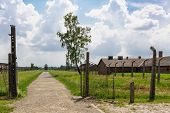 Auschwitz II - Birkenau path from rail ramp to women's barracks at Sector Ia and Sector Ib poster