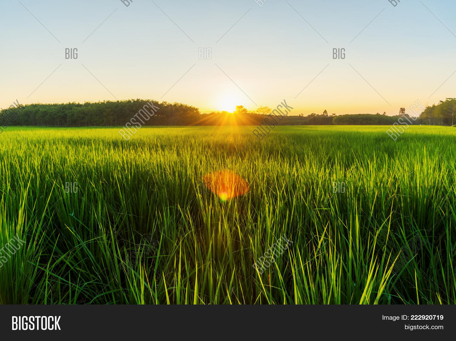 Rice field with fog powerpoint template rice field with fog your text toneelgroepblik Image collections