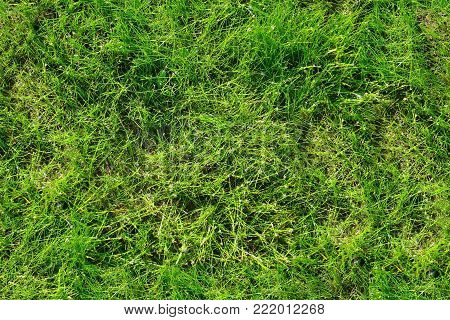 Continuous Lawn Green Grass Photo Lavny Texture