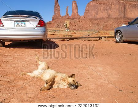 Monument Valley, Arizona, USA - 12 May 2013: The Dog in the background Monument Valley.