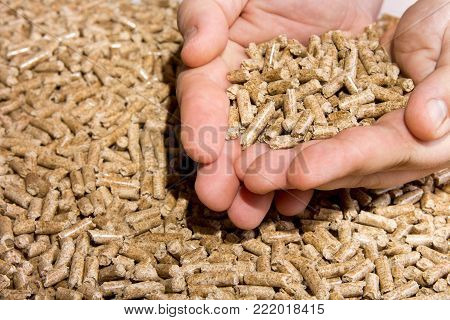 Wood pellets in hand close up .Biofuels. Biomass Pellets, from sawdust.