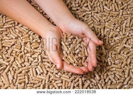 Wood pellets close up .Biofuels. Alternative biofuel from sawdust . Wood pellets in hand. The cat litter.