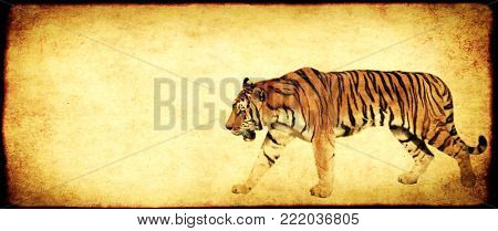 Grunge background with paper texture and walking tiger