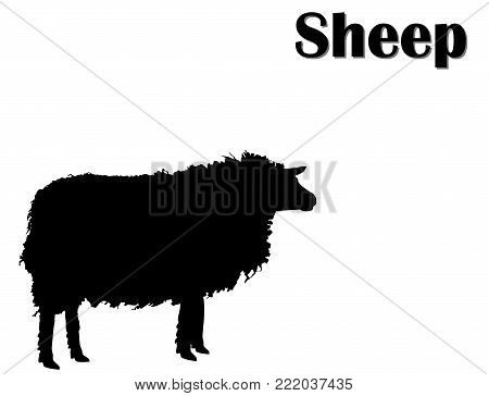 Black silhouette of sheep isolated on white background, side view. Farm animals profile, vector, eps 10