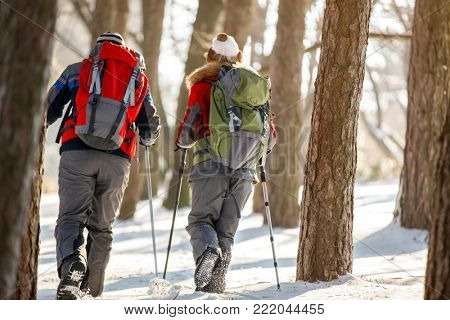 Back view of mountaineers while mountaineering together in forest at winter