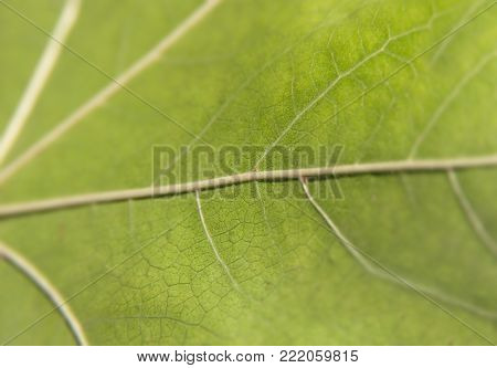 Green macro leaf shot like abstract pattern ecology plant