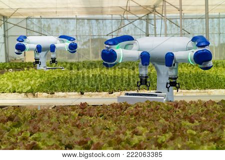 smart robotic in agriculture futuristic concept, robot farmers (automation) must be programmed to work in the vertical or indoor farm for increase efficiency, growing a seed, harvesting, reduce time