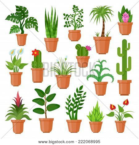 House pot plants. Green indoor houseplants for home and office decoration, tropical flat nature. Vector flat style cartoon illustration isolated on white background