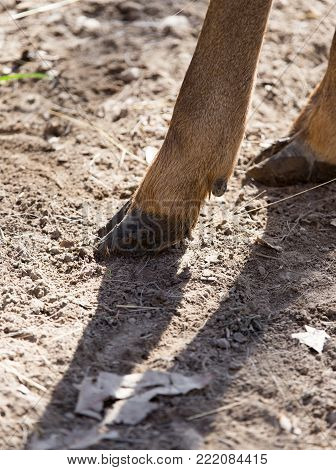 hooves of a deer in nature . In the park in nature
