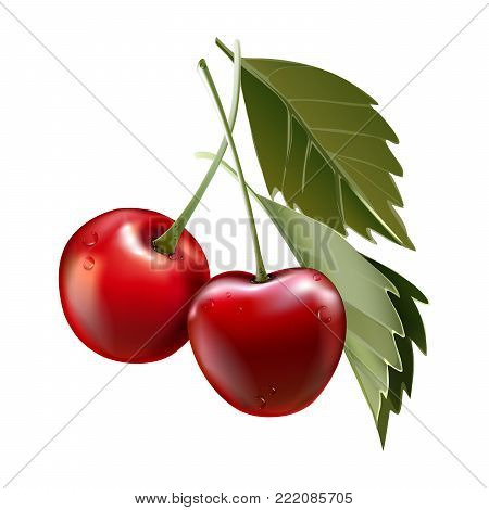 Red cherry. Two ripe berries with stalk. Realistic vector illustration. 3d vector