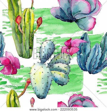 Exotic wildflower cactus pattern in a watercolor style. Full name of the plant: cactus. Aquarelle wild flower for background, texture, wrapper pattern, frame or border.