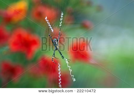 closeup shot of a signature spider with the web