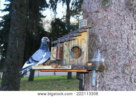 pigeon and titmouse on the feeding-rack seeks the birdseed in the city park