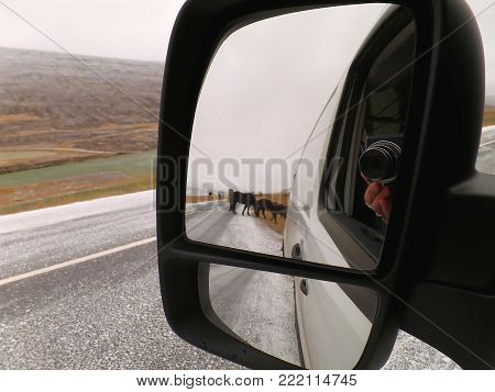 Icy mountain road with many Icelandic horses, a road trip on the Iceland Ring Road