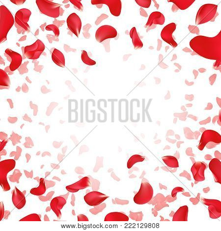 Red rose falling scattered petals wedding vector background. Illustration of red rose petal banner with place for text