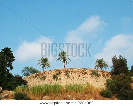 Palm Trees Above Breakage Of The Sea