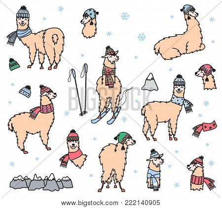 Vector set of characters. Illustration of south America cute lama in winter hat and scarf. Isolated outline cartoon baby llama. Hand drawn Peru animal guanaco, alpaca, vicuna. Drawing for print.