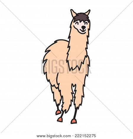 Hand drawn Peru animal guanaco, alpaca, vicuna.