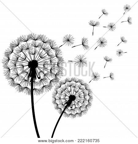 Beautiful stylish nature white background with two stylized black dandelions blowing. Floral trendy wallpaper with summer, spring flowers. Modern backdrop, vector