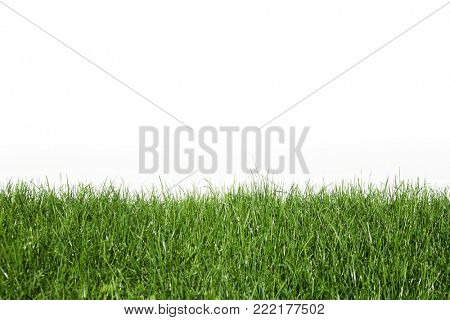 Natural spring grass and white background