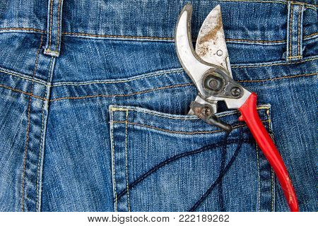 Pruning Shears In The Pocket Of Blue Jeans