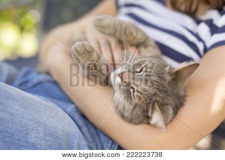 Furry tabby cat lying on its owner's lap, enjoying being cuddled and purring.