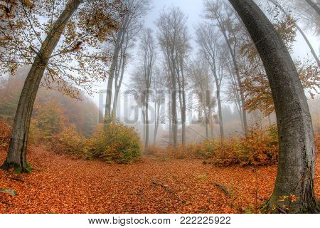 Misty haze in a beechwood in autumn - fish eye lens view