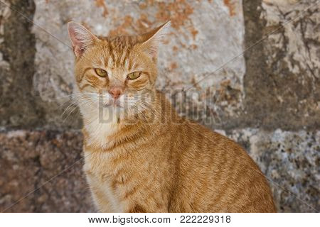 Close-up of a domestic cat staring at the camera in front of an old stone wall.