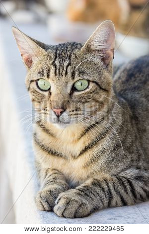 Close-up of a domestic cat staring at something ears up.