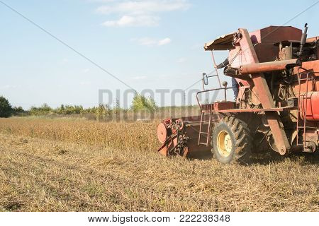 Harvesting of soybean field with harvester, blue sky. Agriculture soy crop.