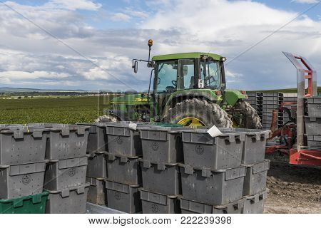 Verzy, France - September 9, 2017: Harvest of the grapes in the champagne area  with green tractor with red  cart loaded with crates with pinot noir grapes.