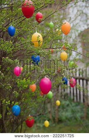 easter bush in the garden with hanging easter eggs, traditional holiday usage