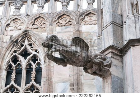 Architectural detail, gargoyle, of the famous Duomo di Milano in Italy.