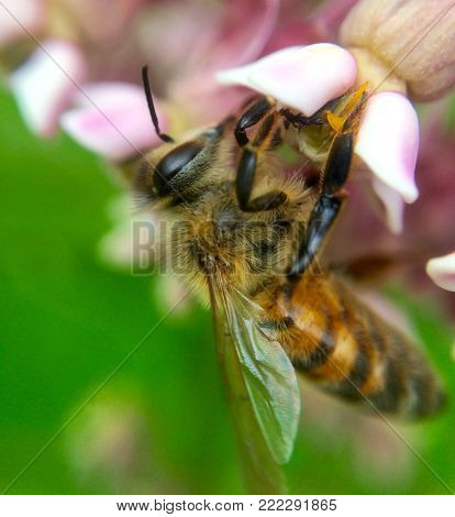 Close up image of a bee pollinating a flower