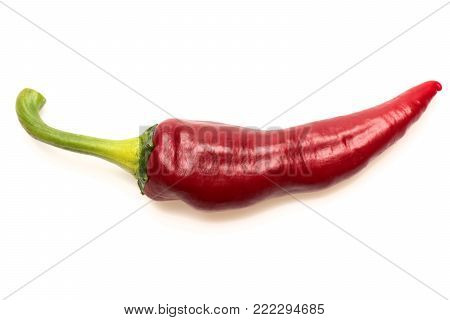 Agriculture And Fresh Food Concept. Chili Peppers Of Red Color