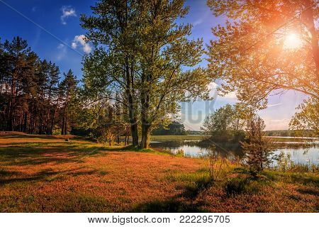 A beautiful view by the lake in forest during sunset in a summer evening. majestic sunset in nature. Fantastic river with fresh grass in the sunlight. wonderful sunny landscape.