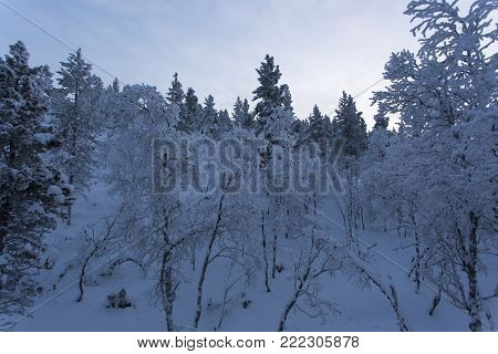 Frozen landscape during polar night in Saariselka, Finland