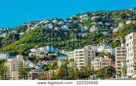 Houses on a hill side, Wellington City, Wellington, New Zealand