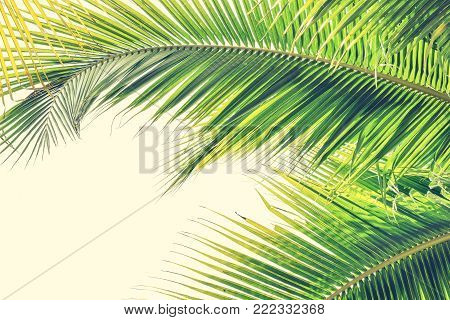 Palm Sunday background with green tropical tree leaves against natural summer or spring sky