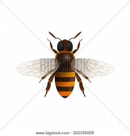 Flying honey bee isolated icon on white background. Insect symbol for natural, healthy and organic food production vector illustration in cartoon style