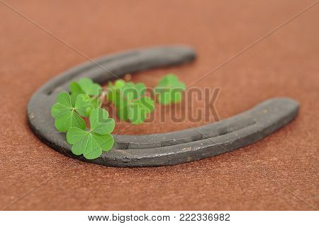 A bunch of clovers displayed with a rusty horse shoe