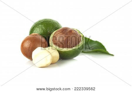 Macadamia nut an  isolated on white background